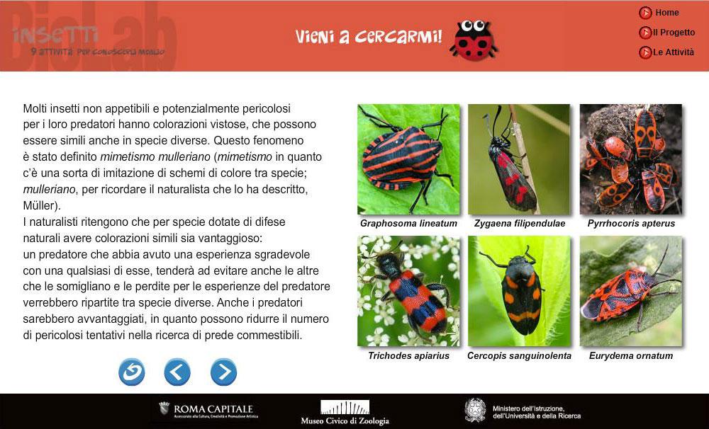Mimetismo negli insetti