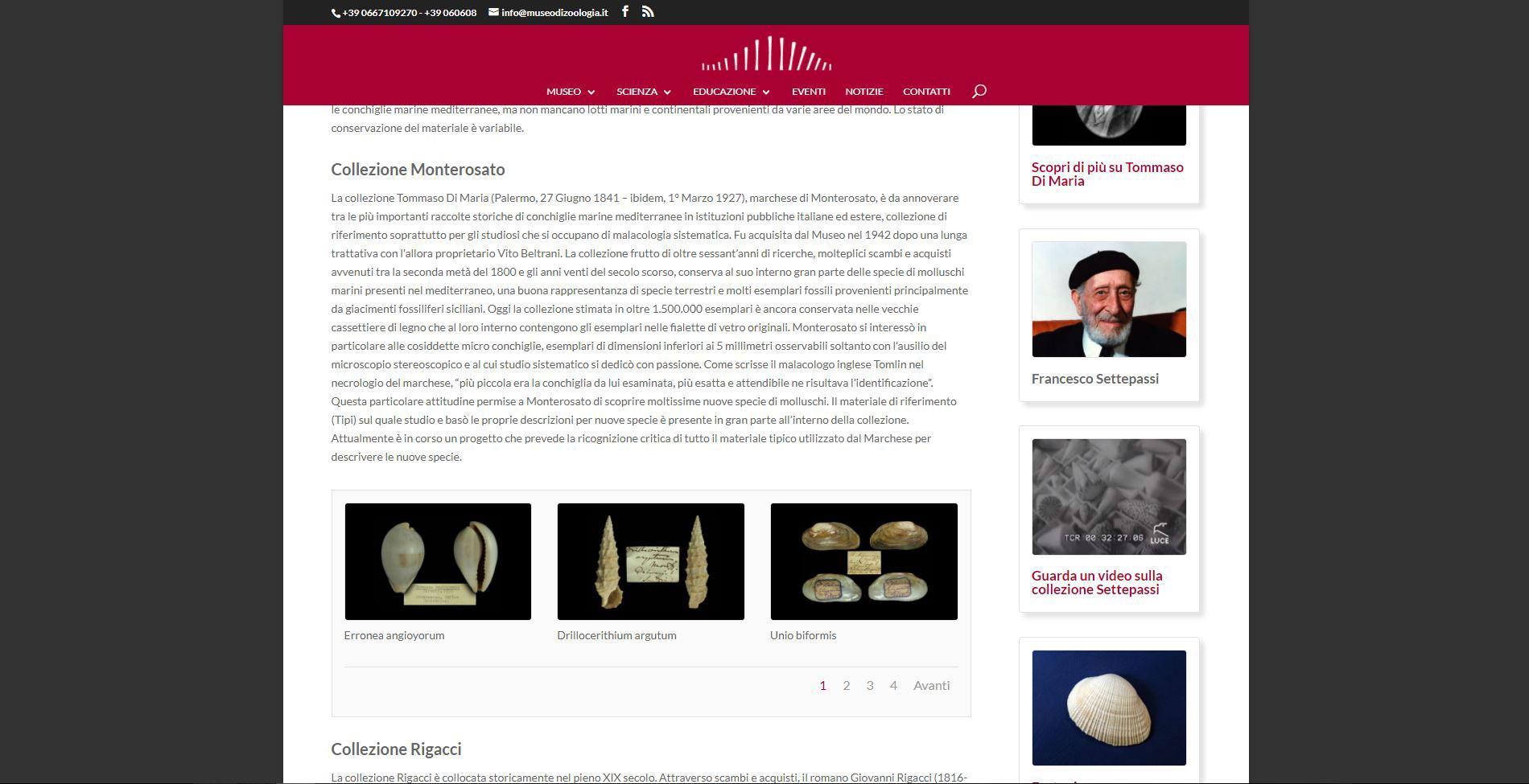 Pagina collezioni malacologiche